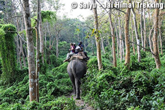 Enjoy Elephant ride in the Jungle